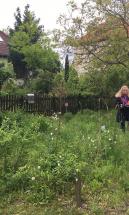 """100 Quadratmeter insektenfreundlicher """"Wildwuchs"""" vor dem Haus..."""